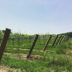 Hav Vineyards
